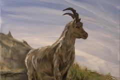 """Young Ibex"""