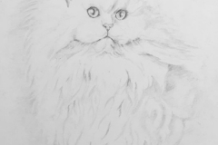 """Misty Persian cat"""